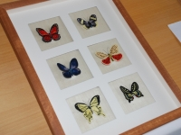11-Schmetterlinge